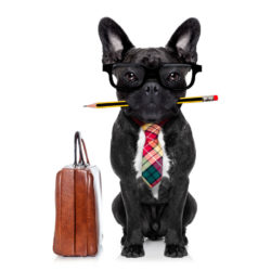 business dog with briefcase and pencil in mouth