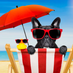 dog on a beach chair with sunglasses on