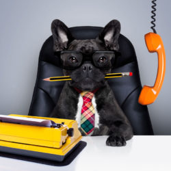 dog behind a desk with glasses on with a pencil in his mouth